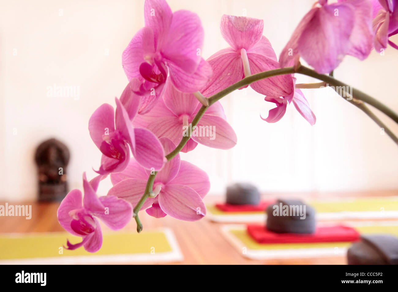 Yoga pillows and pink orchid decoration in a yoga room - Stock Image