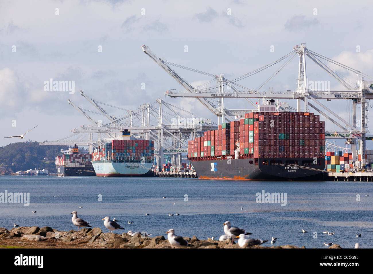 Container ships wait unloading at Port of Oakland - California USA - Stock Image