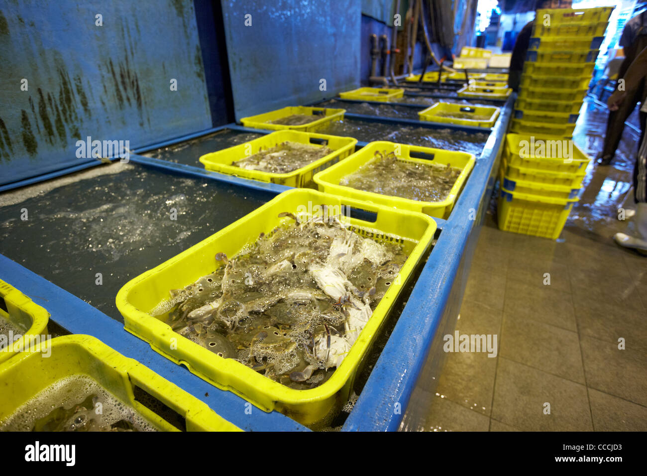 tanks of fresh crabs for sale at aberdeen wholesale fish and seafood market hong kong hksar china asia - Stock Image