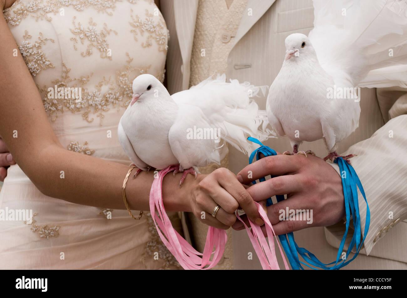 Two White Doves Love Birds Stock Photos Two White Doves Love Birds