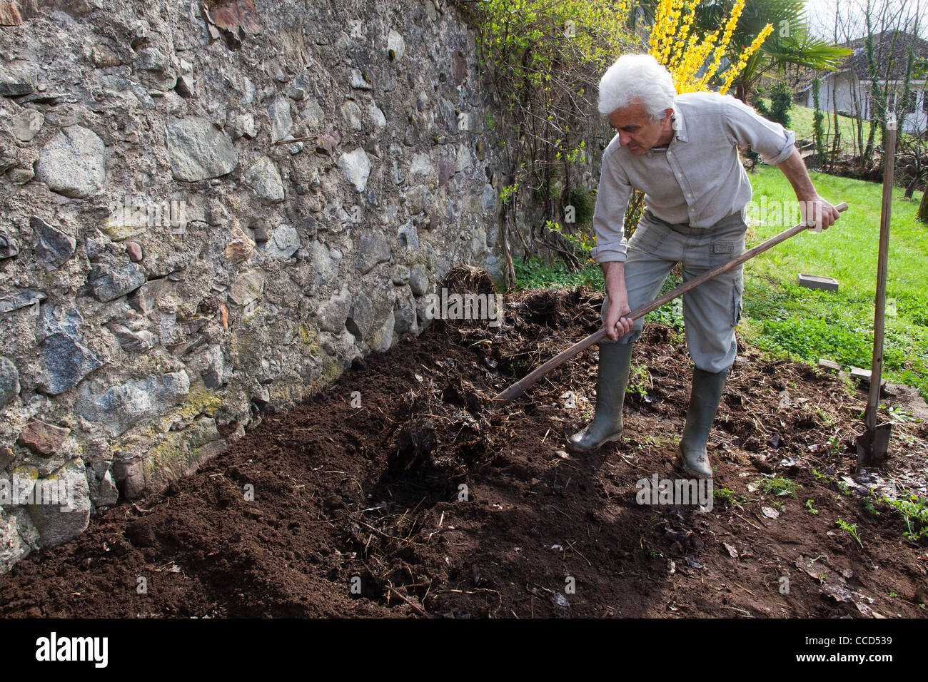 Fertilizing with manure and digging, step 3, is embedded in the soil the manure - Stock Image
