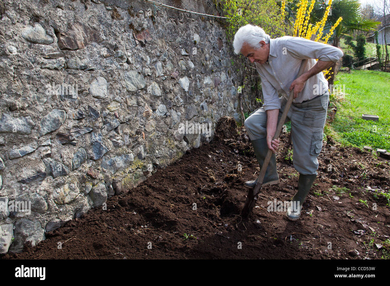 Fertilizing with manure and digging, step 4, with a shovel, turns the ground - Stock Image