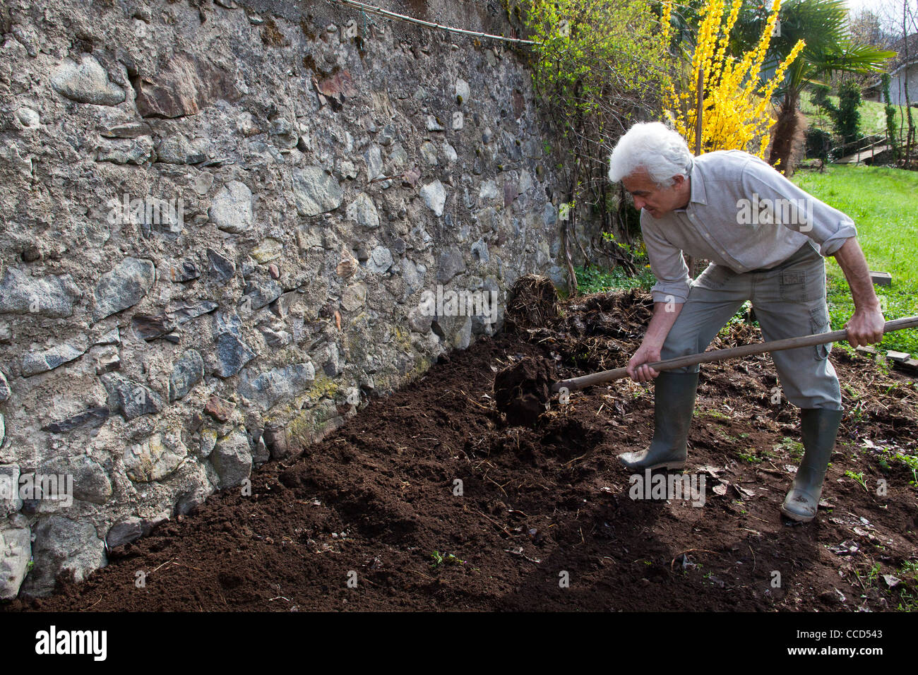Fertilizing with manure and digging, step 5, this covers the layer of manure - Stock Image