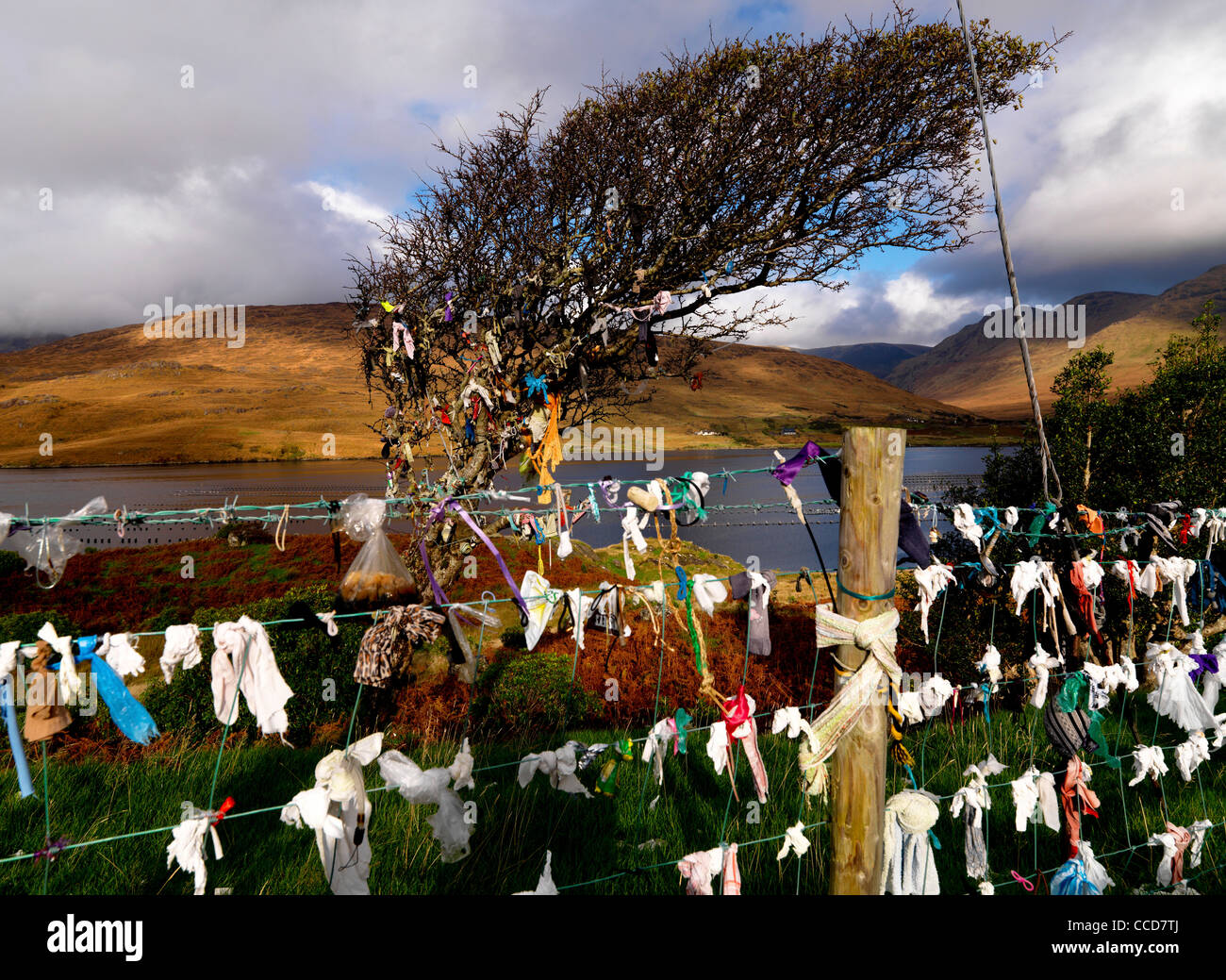Fairy Thorn Tree, Killery Harbour, Co. Galway Ireland - Stock Image