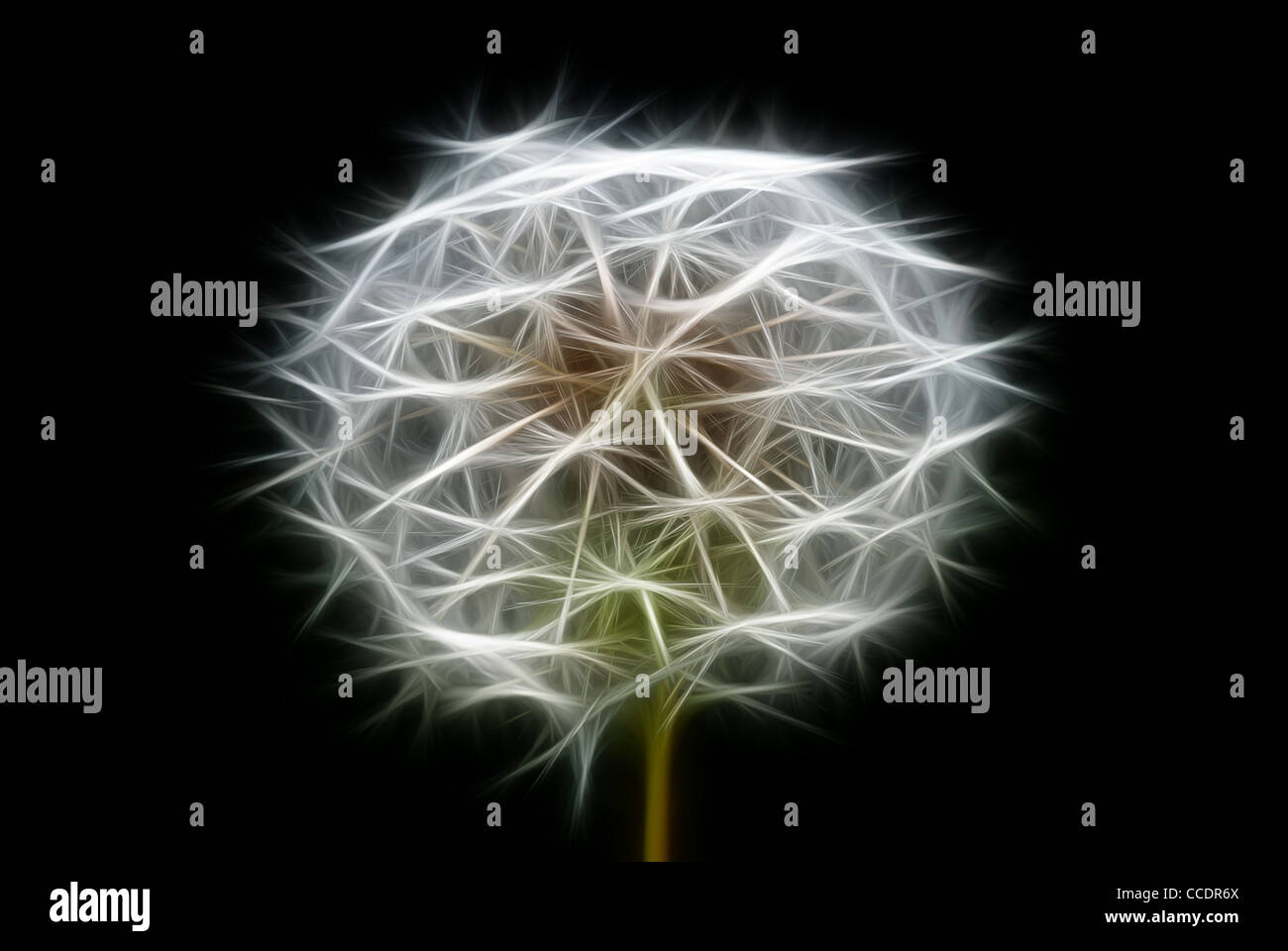 abstract dandelion, photo with graphic special effects Stock Photo