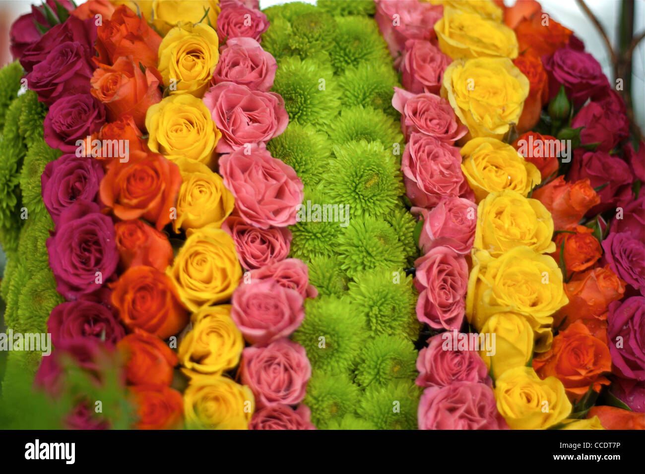 Images of all colours rose flowers