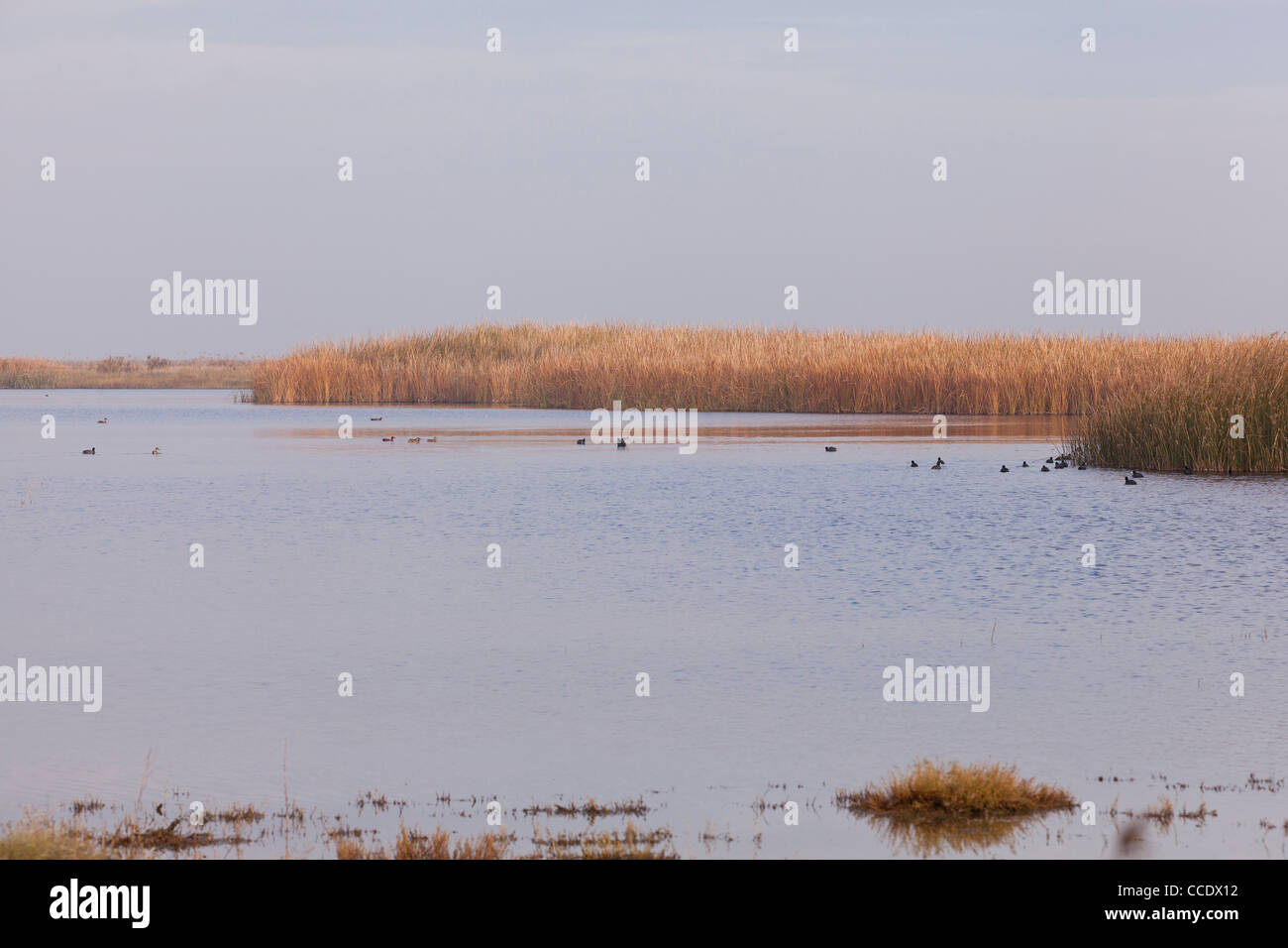 Grassy marshland - Stock Image
