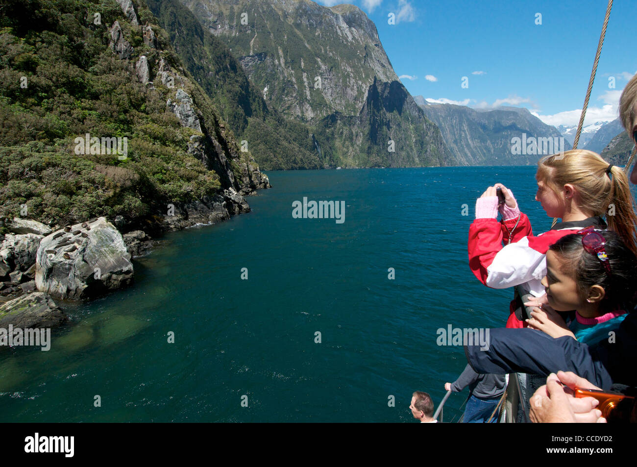 Passengers on a cruise sip photographing fur Seals sunning themselves a rock in Milford Sound - Stock Image