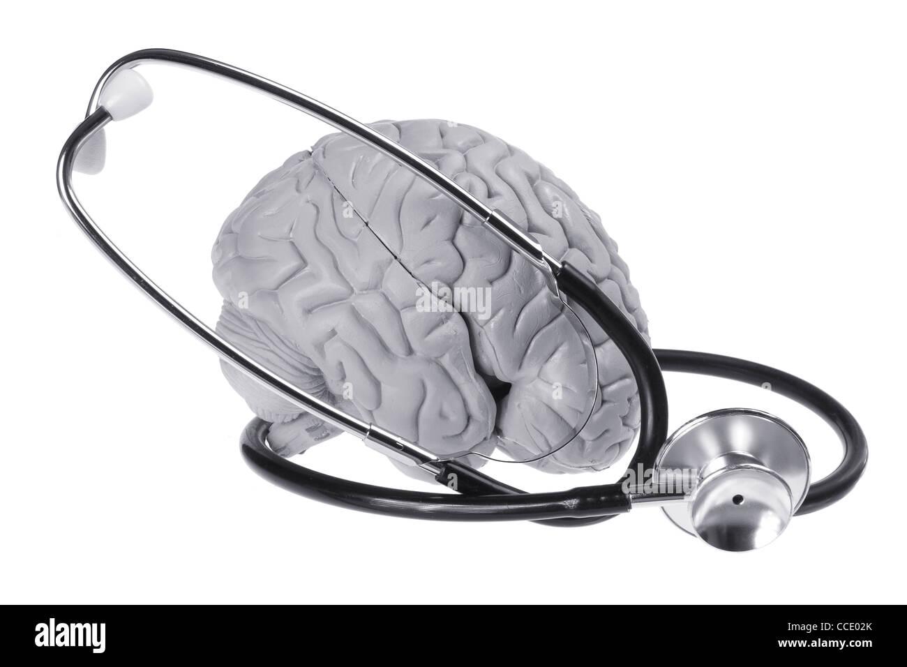 Brain Specimen and Stethoscope - Stock Image