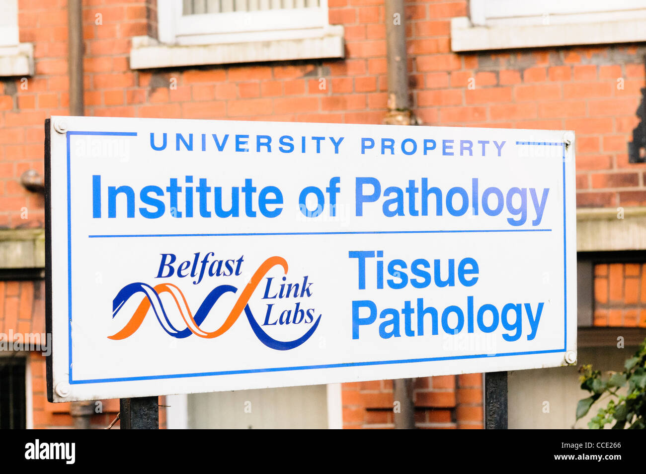 Sign for the Belfast Link Labs, medical and blood testing laboratories, at the Royal Victoria Hospital, Belfast - Stock Image
