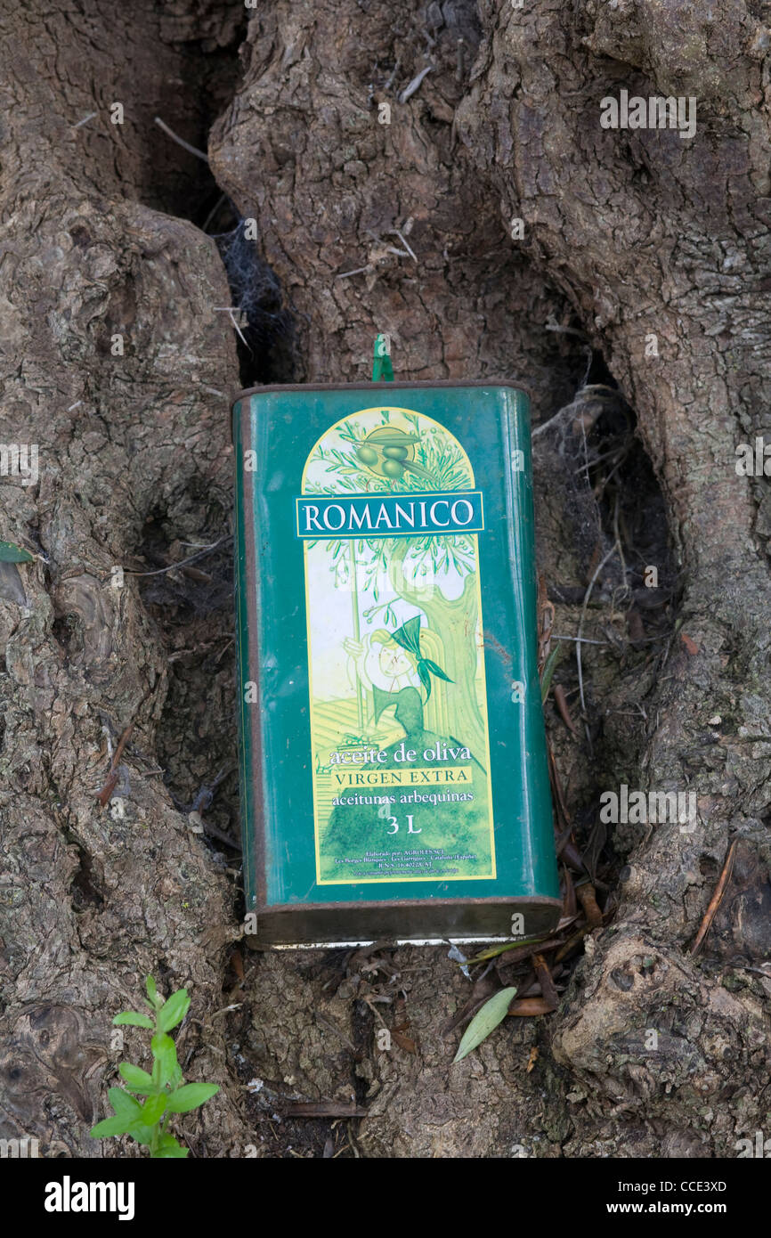 A can of Romanico olive oil nestles at the base of a tree inside the Eden project's Mediterranean biome - Stock Image
