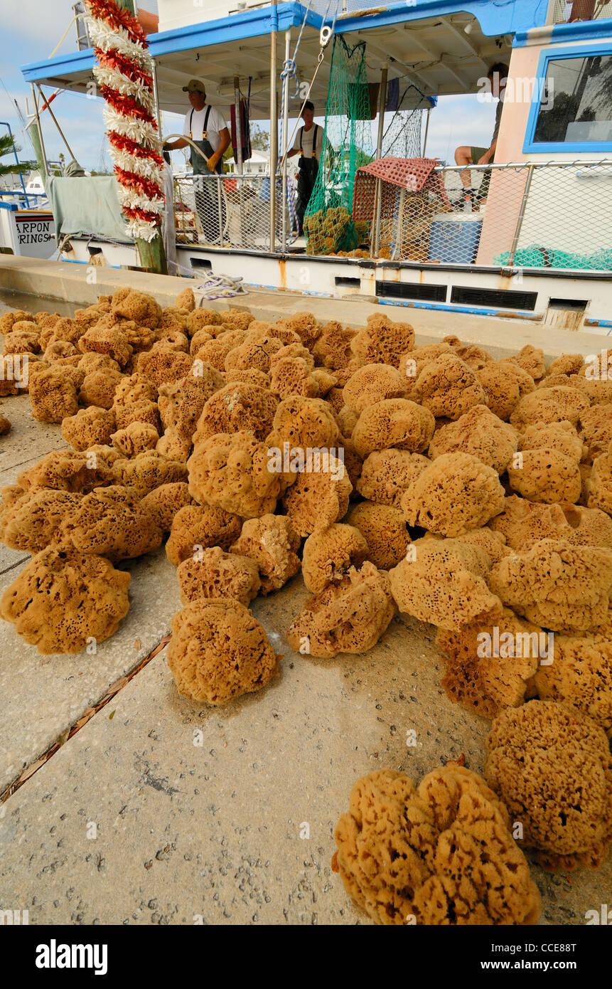 A sponge harvest in Tarpon Springs, Florida. - Stock Image