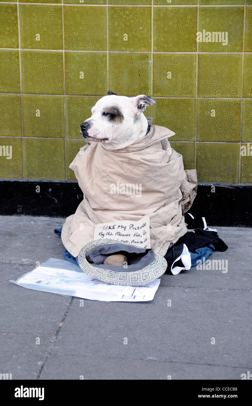 Dog dressed up against the cold and used for begging, there is a cap in front of him with a note asking for money - Stock Image
