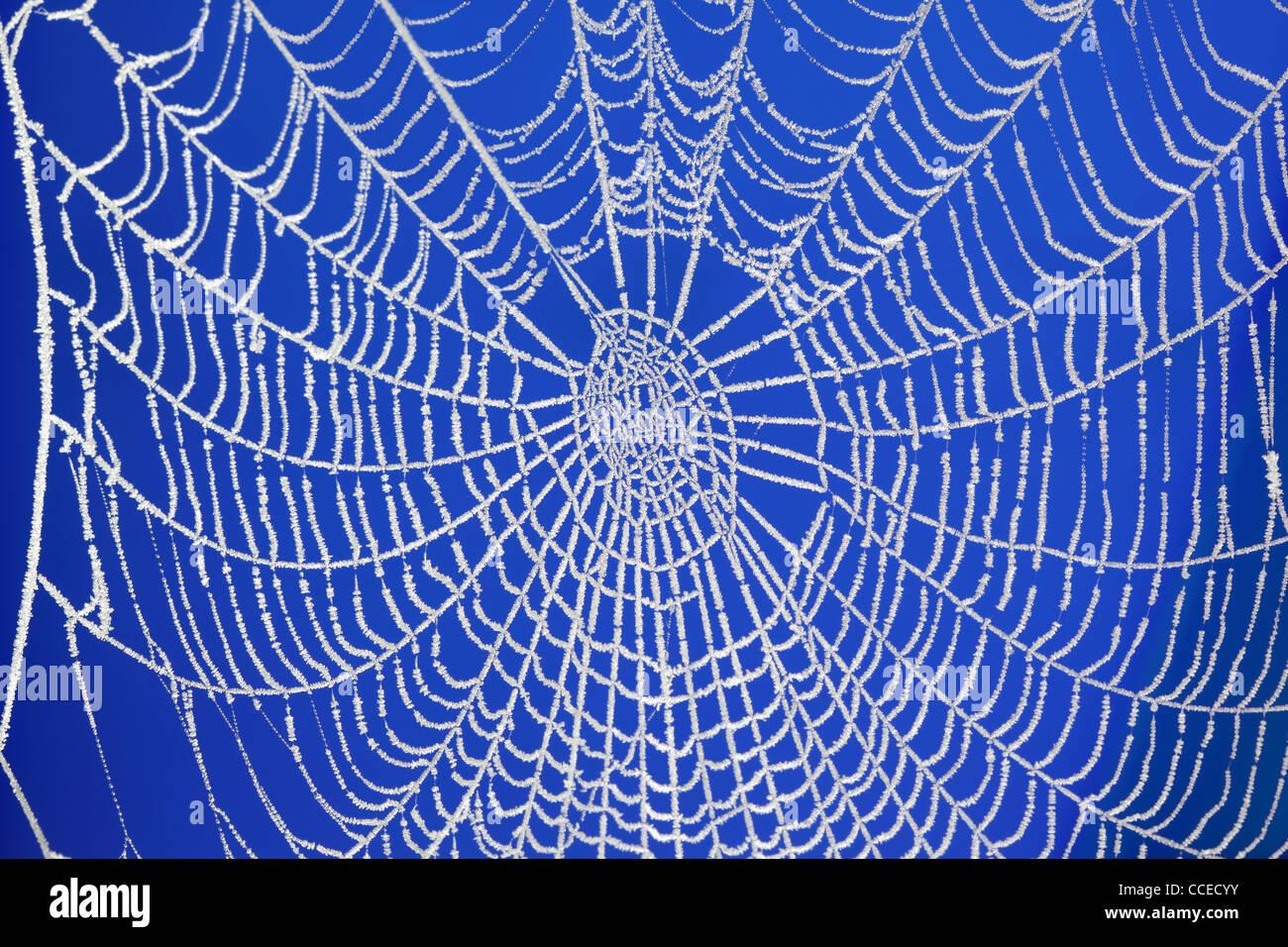 Frozen spider web - Stock Image
