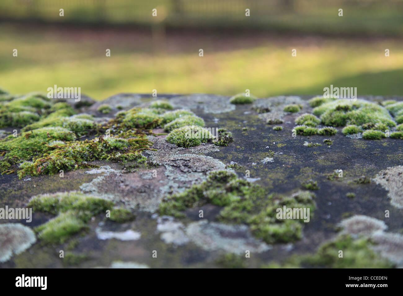 Moos,Mauer,Winter,Sonne,Makro,Flechten,Flechte,Schatten,grün,grau,Natur,Gewächs,weiss,filigran,Vordergrund,Pflaster - Stock Image