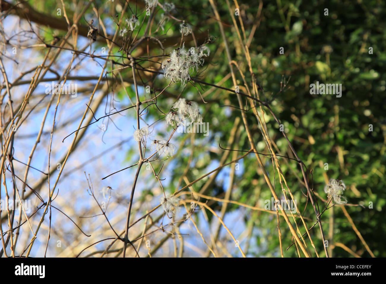 Natur,nature,winter,sonne,sun,wasser,water,fluss,river,Reflektionen,reflection,Sonnenschein,Idylle,Idyl,Baum,tree,Sträucher,bush - Stock Image