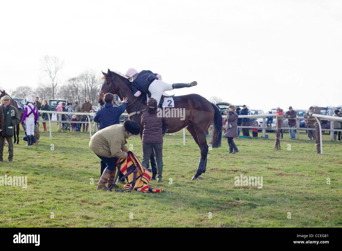 A  Thoroughbred horse Equus ferus caballus in the collecting ring at the Heythrop Hunt point to point - Stock Image
