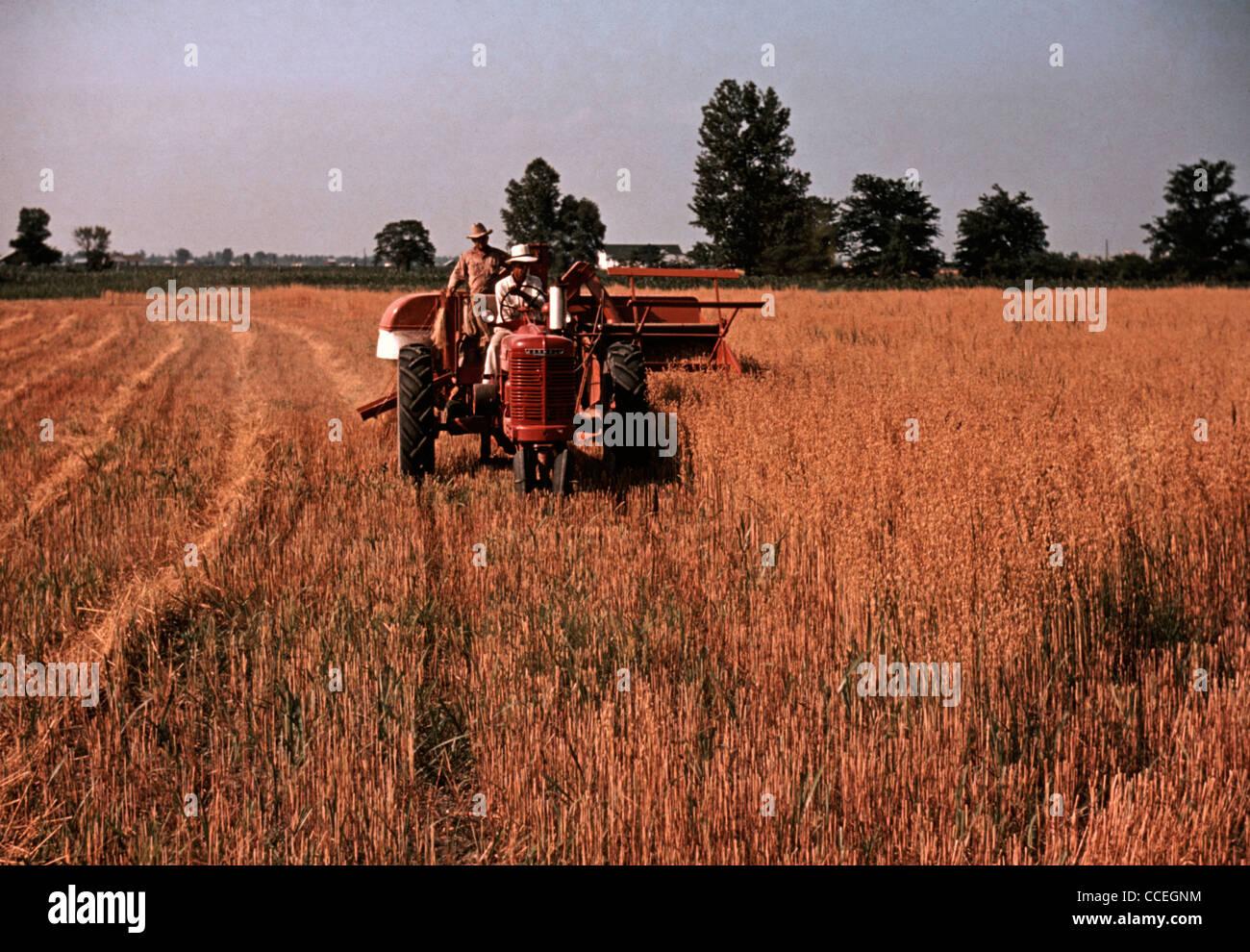 Harvesting oats, southeastern Georgia, circa 1940 - Stock Image
