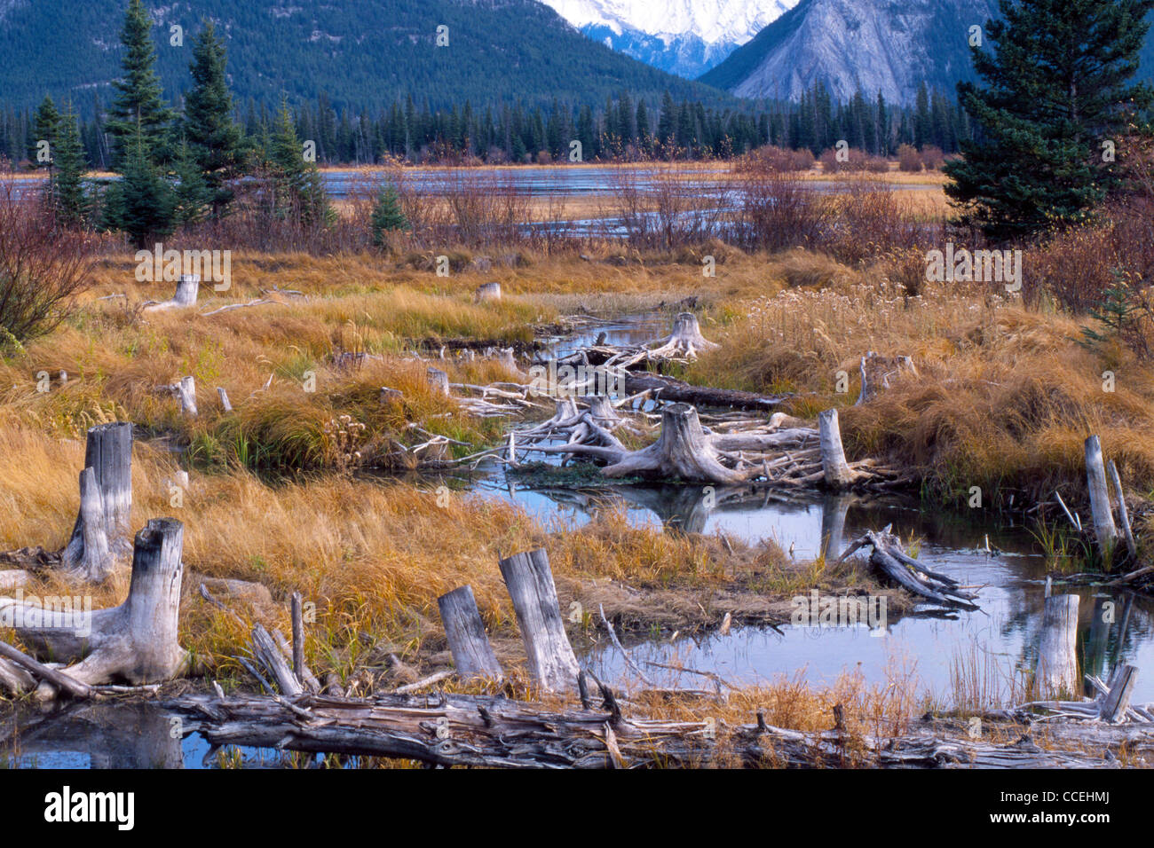 The wetlands of Vermilion Lakes are seen in the Bow River Valley in the Canadian Rockies at the foot of Mount Norquay Stock Photo