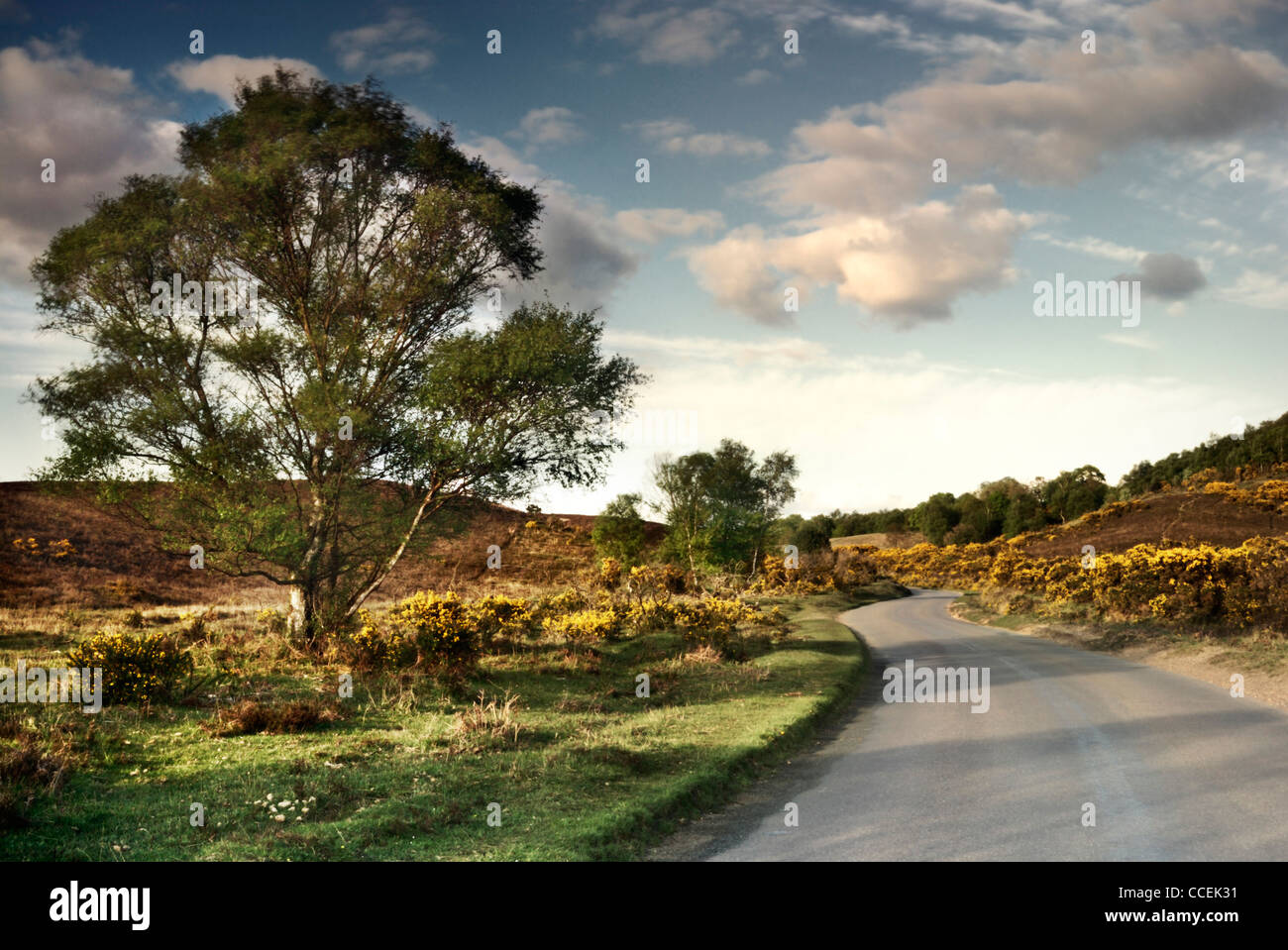 Heathland in the New Forest, Hampshire, England, UK Stock Photo