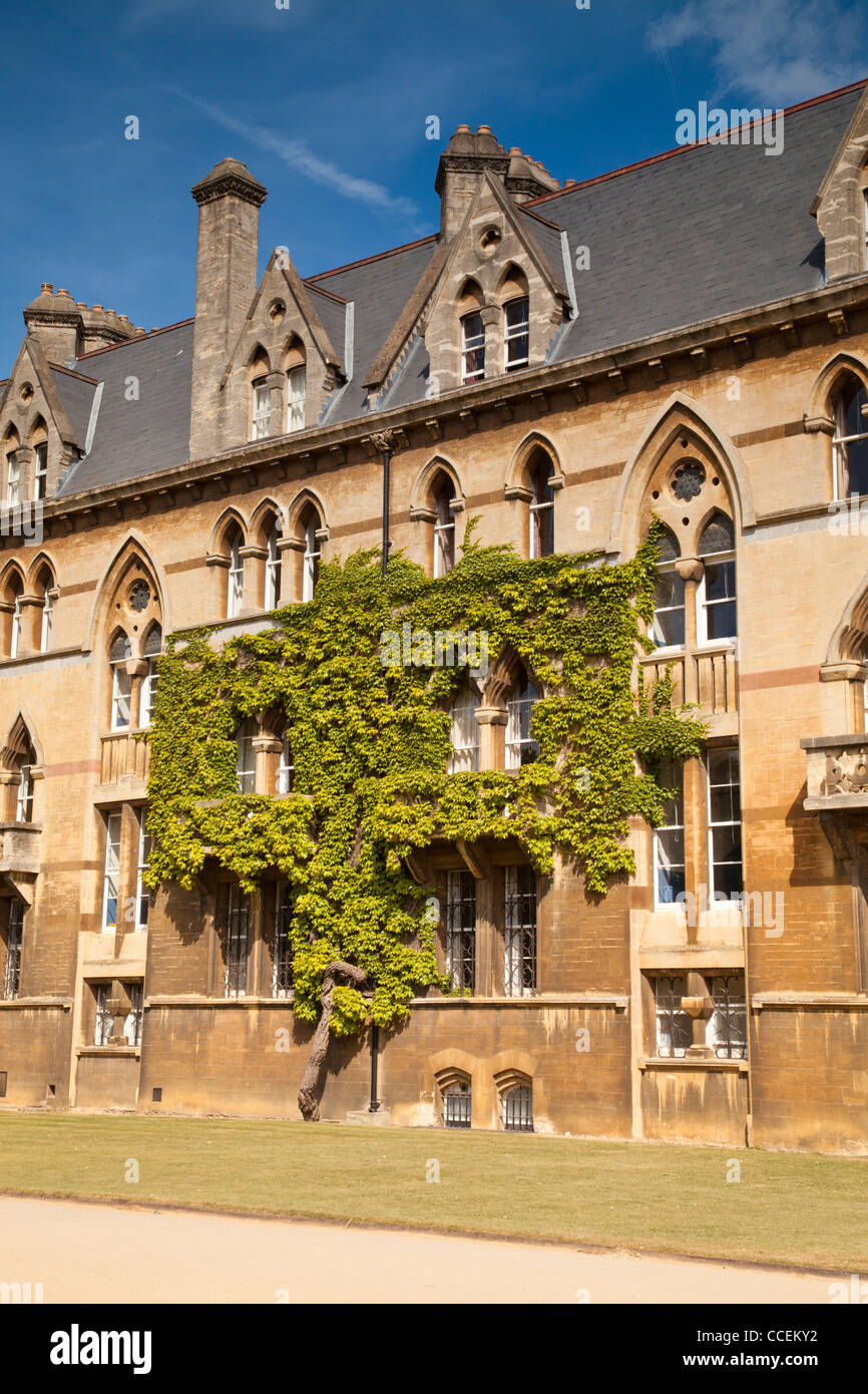 Virginia creeper growing on the facade of Christ Church College Oxford England - Stock Image
