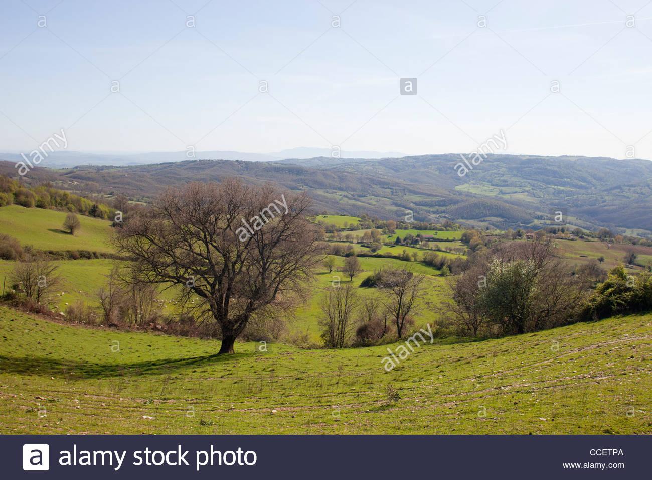 countryside,scansano,province of grosseto,tuscany,italy,europe - Stock Image