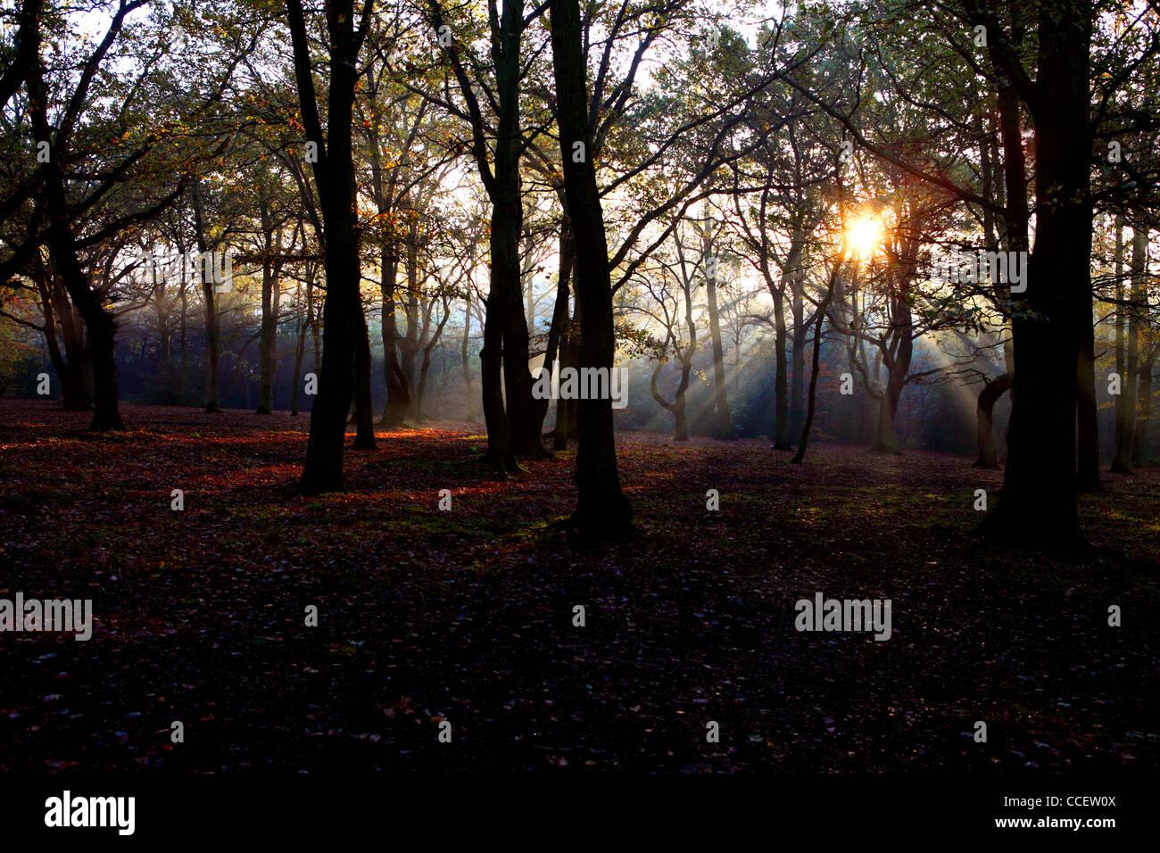Sun shining through trees in Autumn time - Stock Image