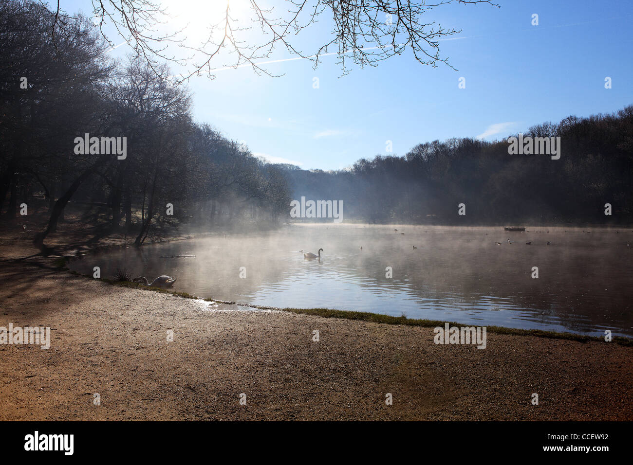 Wildfowl on a misty lake - Stock Image