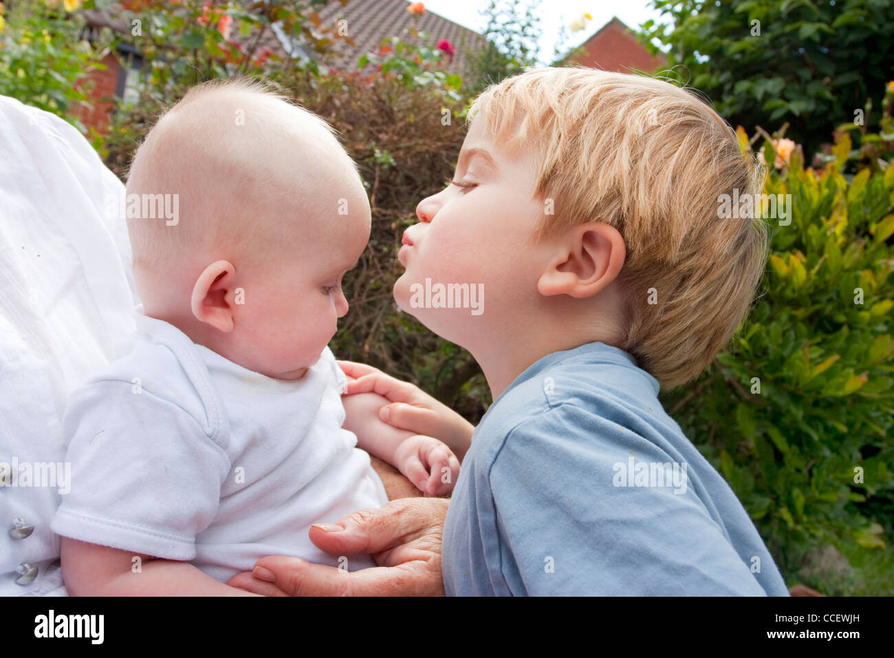 Blonde toddler age 4 kissing 6 month old baby brother and sister stock image