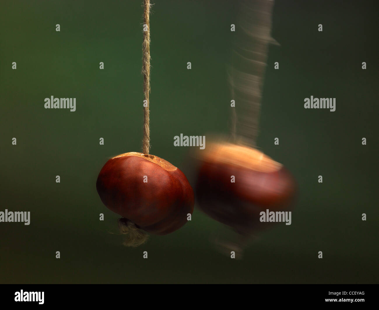 A conker striking another conker - Stock Image