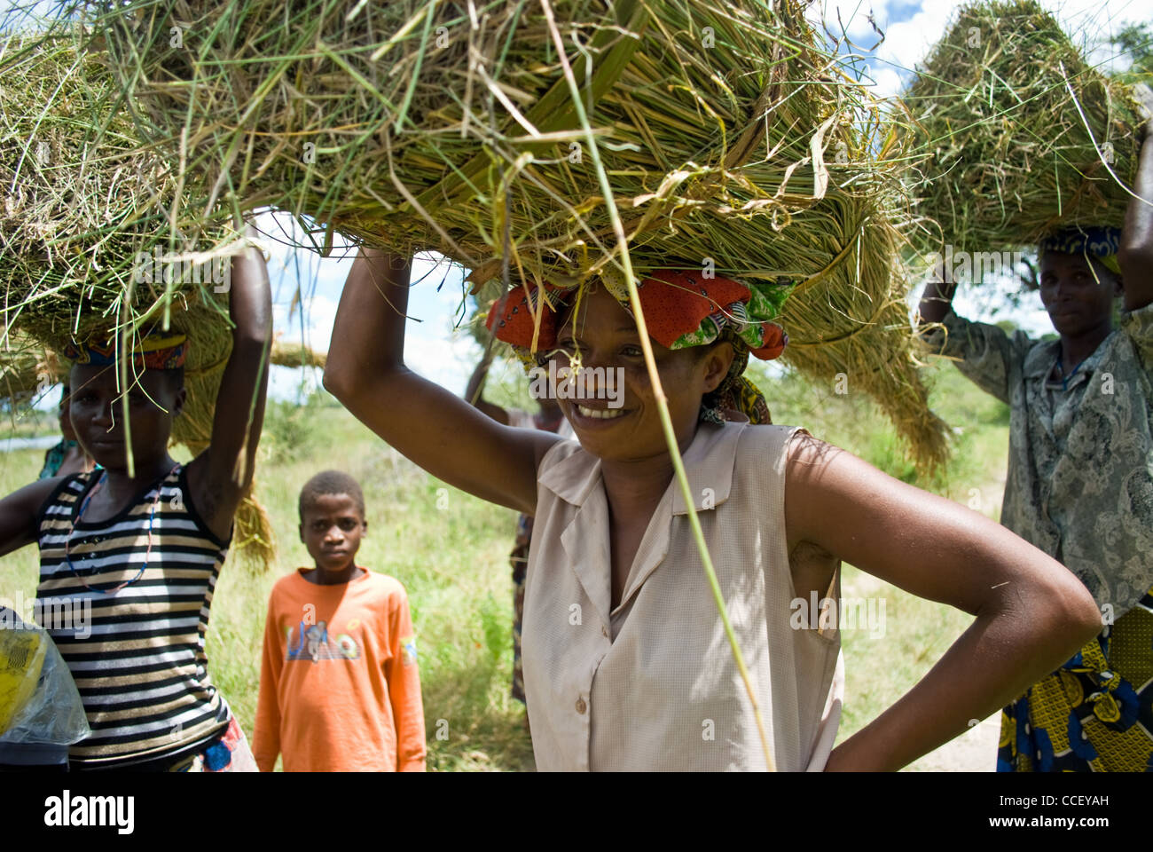 A young Zambian women carrying cut grass used for thatching. - Stock Image