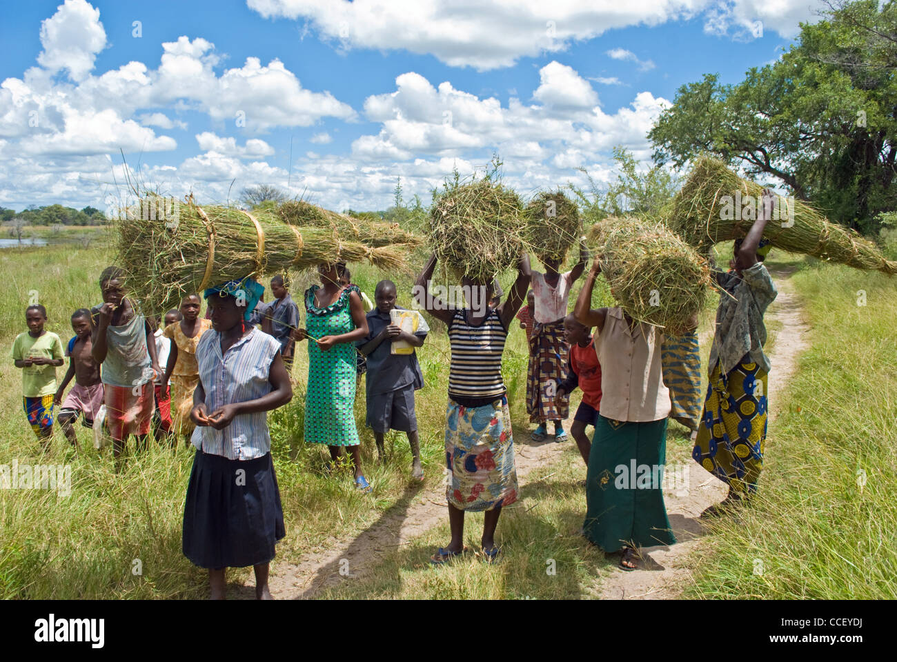 Zambian women returning from the fields carrying bales of cut grass used for thatching. - Stock Image
