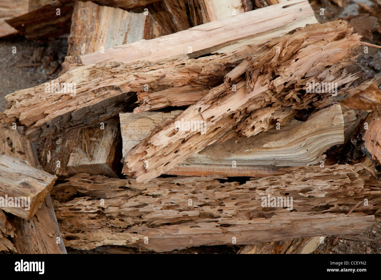 Close-up view of weathered driftwood - Stock Image