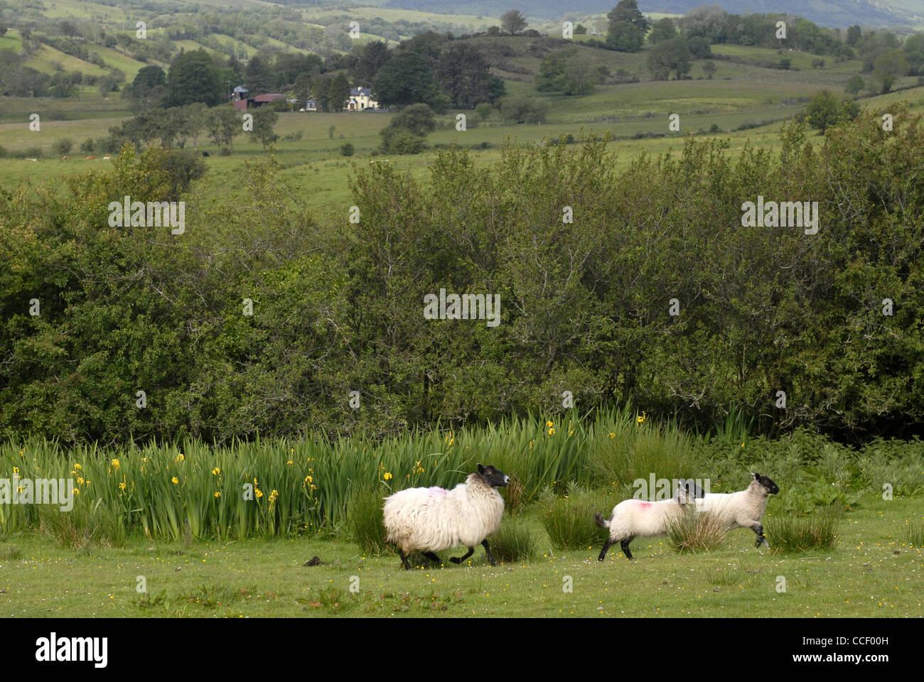 Near Castletown, The Cuéllar Trail, Castletown, County Laois, Leinster, Ireland, Europe. - Stock Image