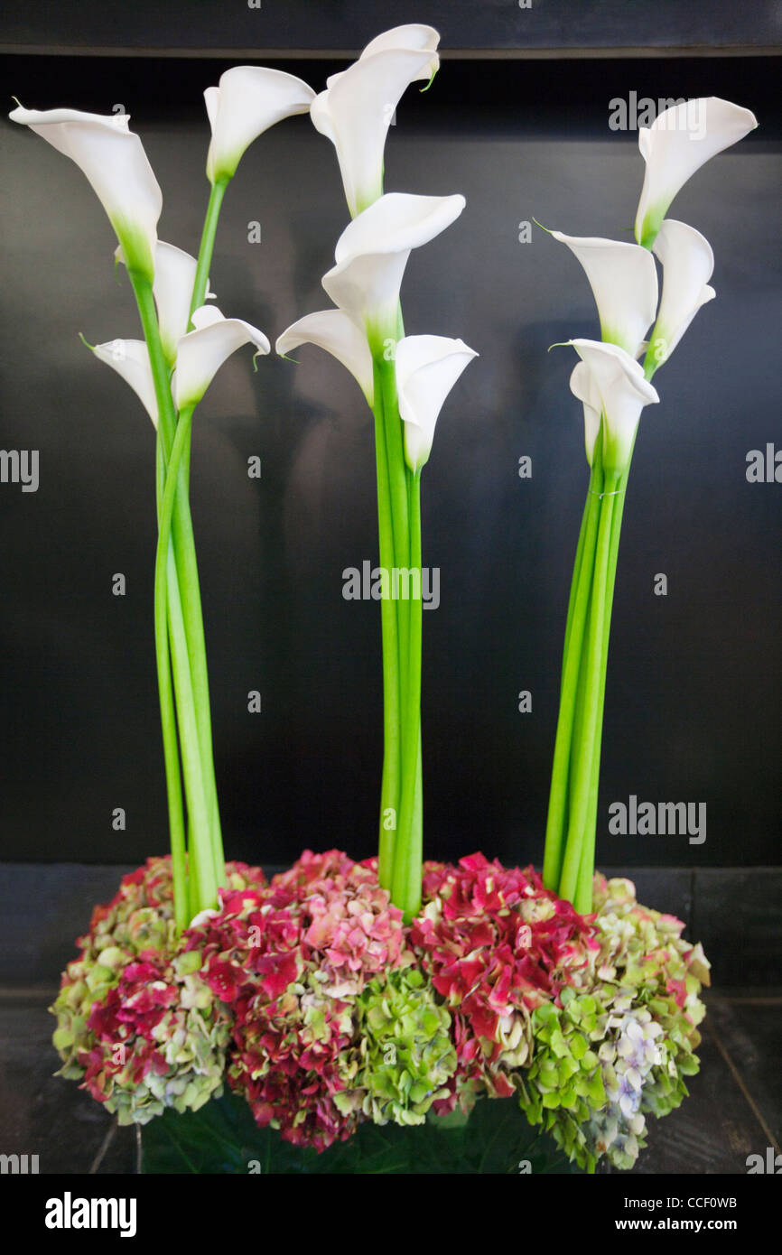 Three calla lily kept on the floor - Stock Image