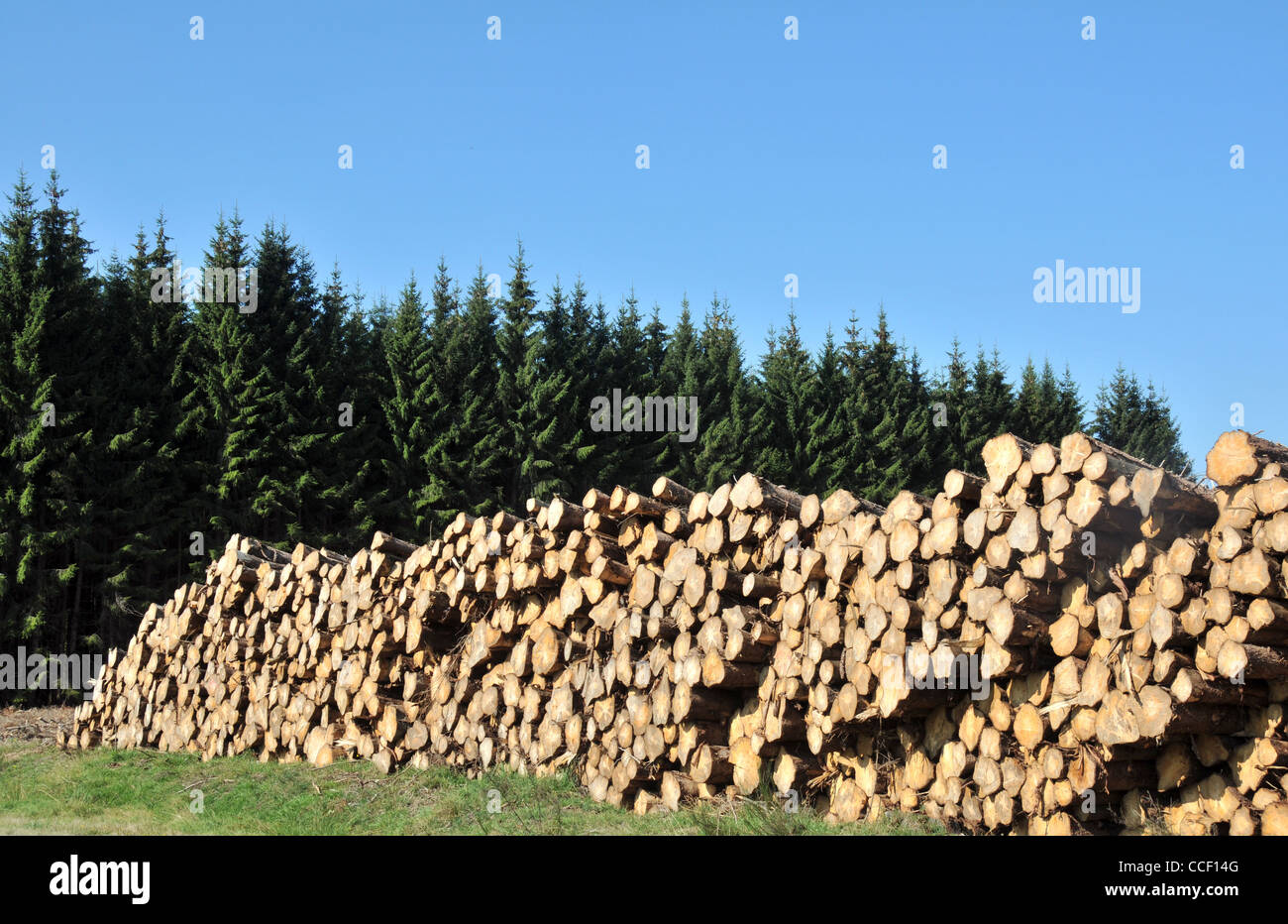 firs trees logs Auvergne France - Stock Image