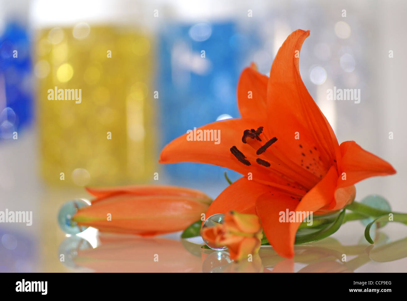 orange lily with a remedy for aroma therapy as a background - Stock Image
