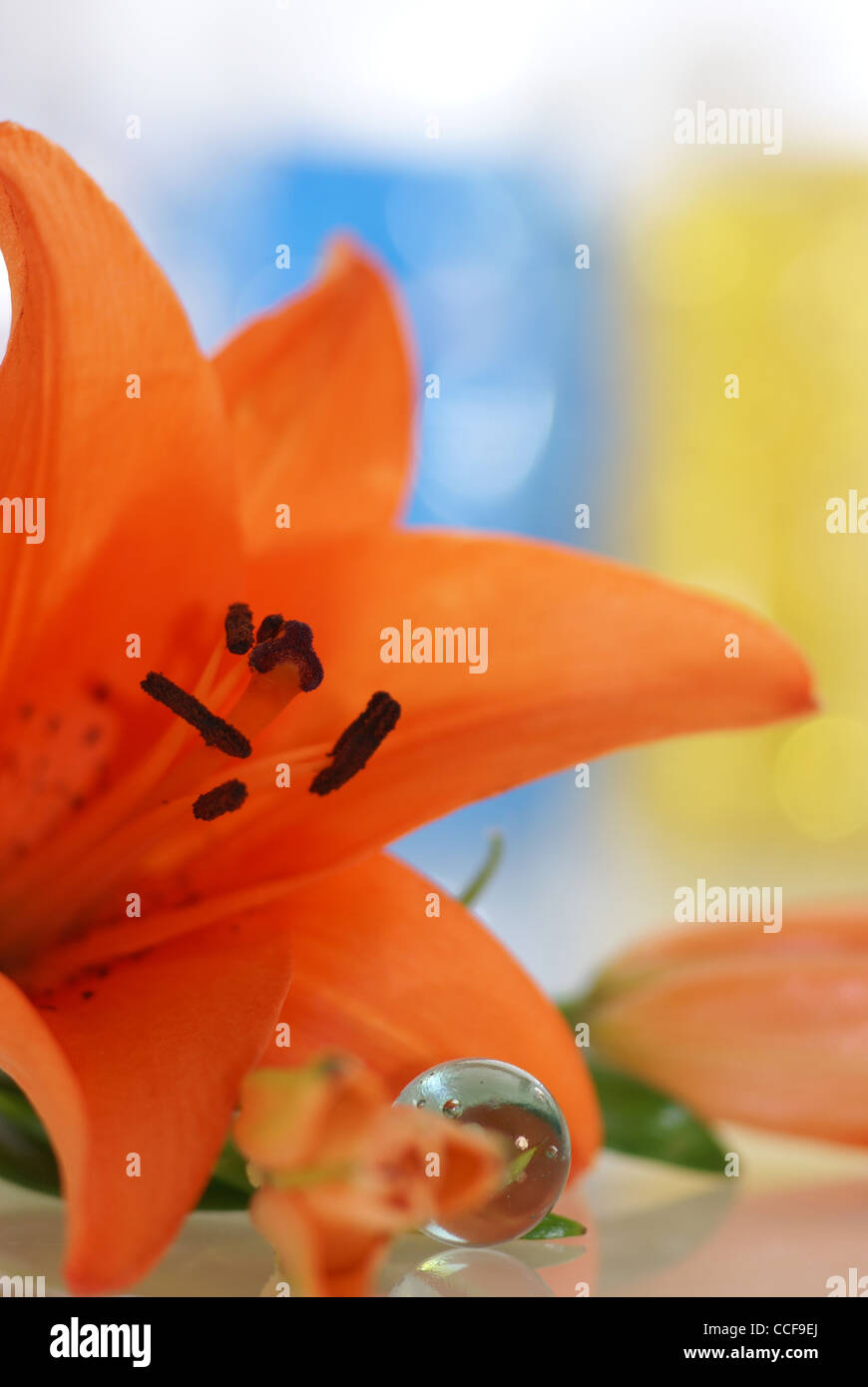 orange lily with a remedies for aroma therapy in spa - Stock Image