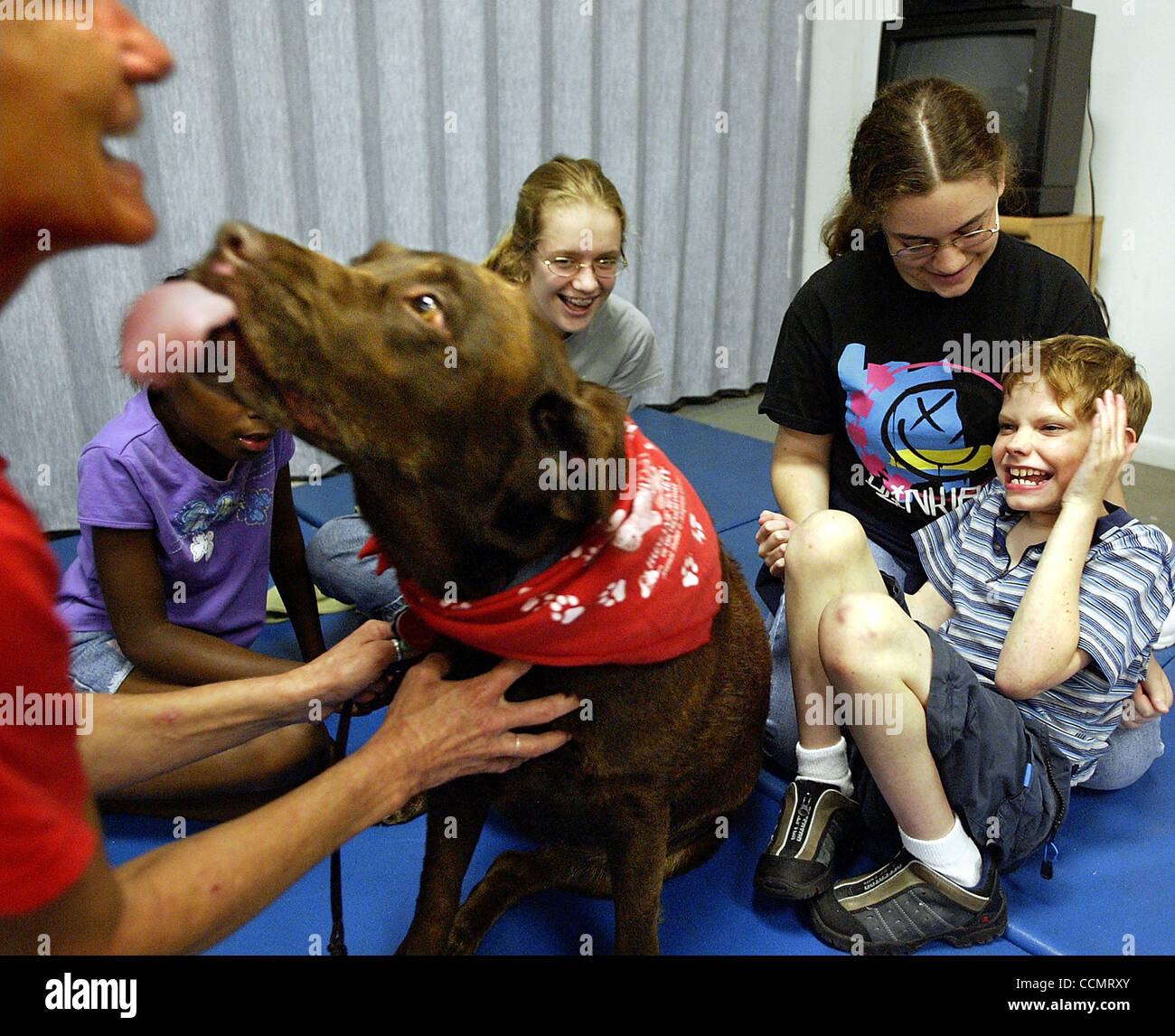 LIVE METRO, 061604, STUART.....Ian Allore, 11, right, giggles as therapy dog, Mya, a chocolate lab, licks her owner, Stock Photo