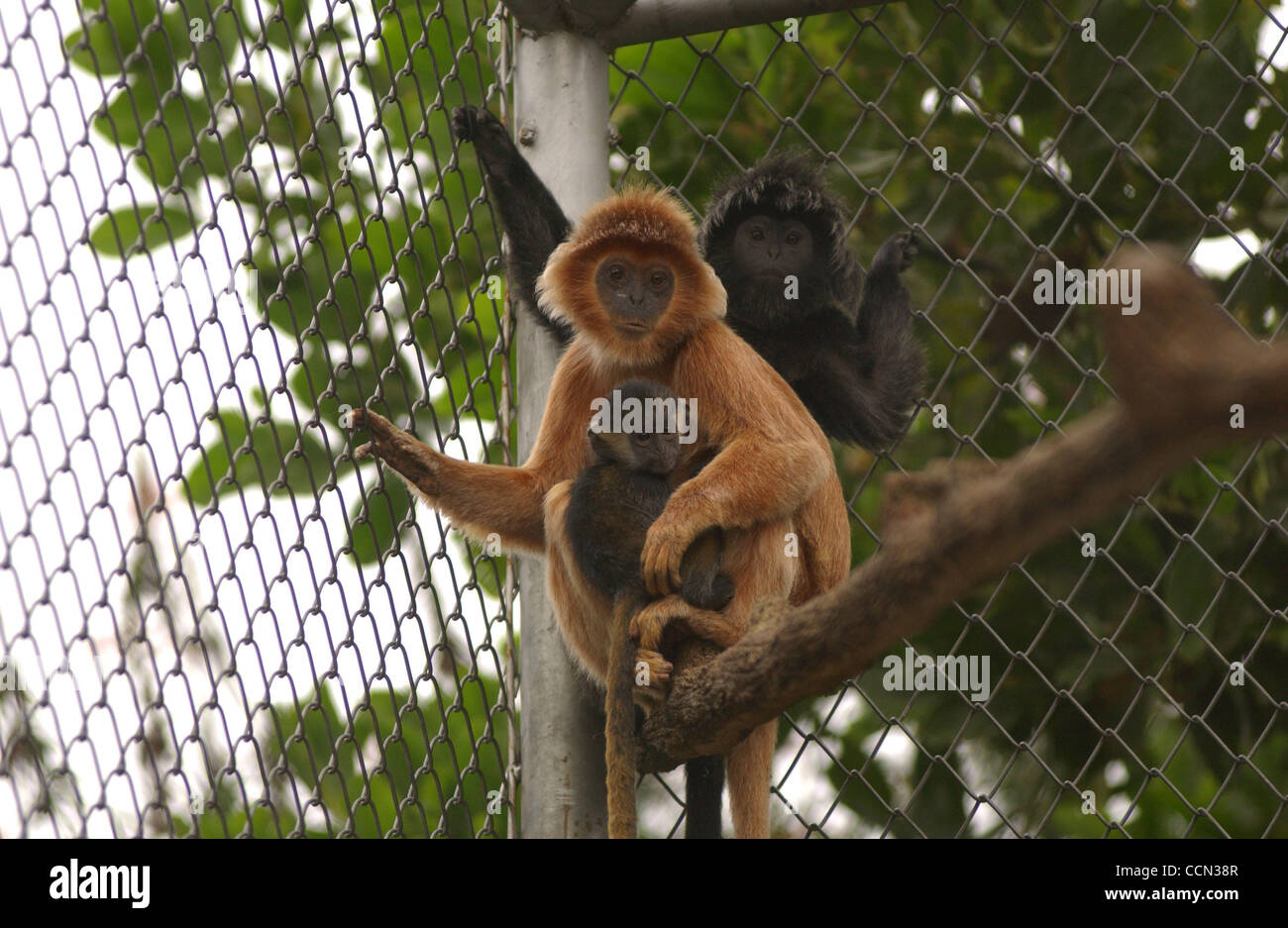 Java monkey in the wild and at home 19