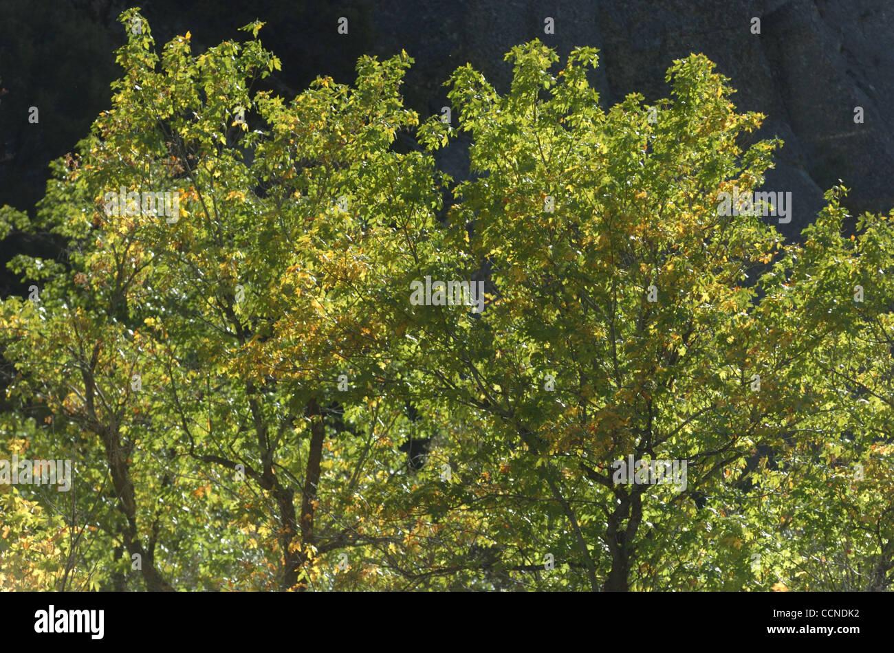 Sep 23 2004 Kings Canyon Ca Usa Aspen Grove Kings Canyon