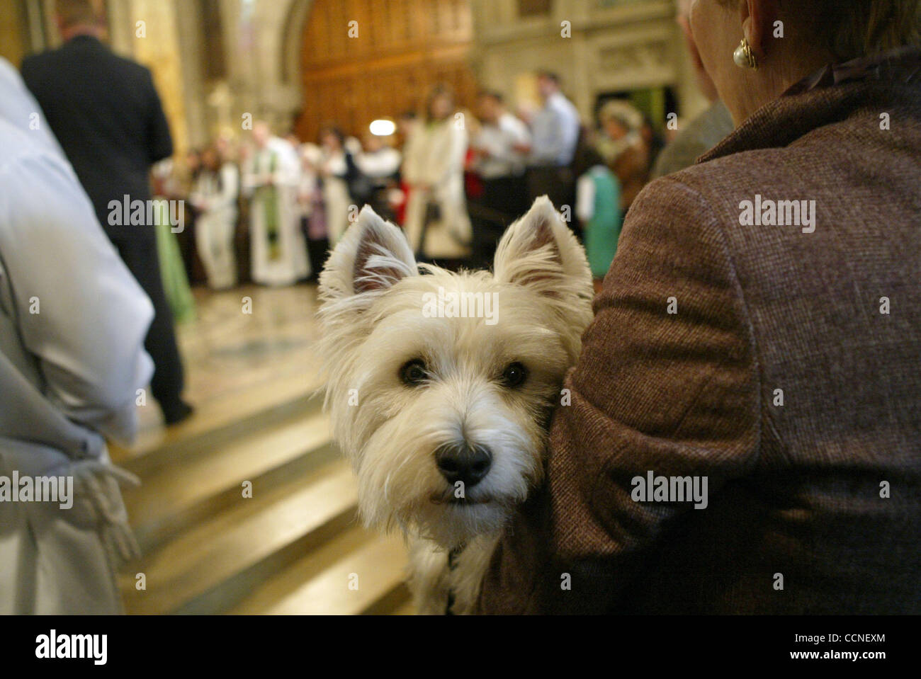 Blessing of the animals at the St. Bartholomew Church located at Park Ave. and E 51st. St. in Manhattan. This day - Stock Image