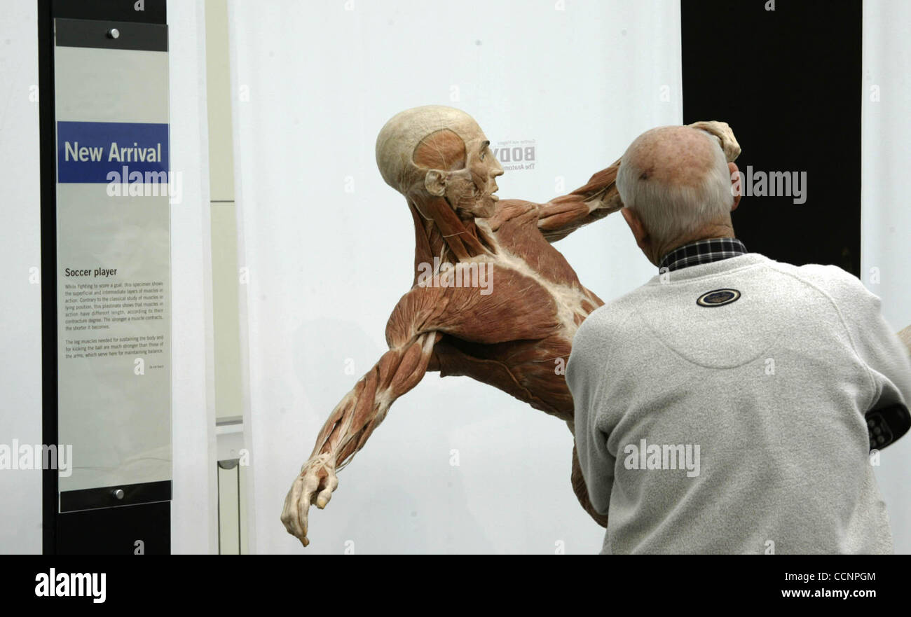 Nov 22, 2004; Los Angeles, CA, USA; Visitors take  a good look at the latest anatomical plastination  added to the - Stock Image