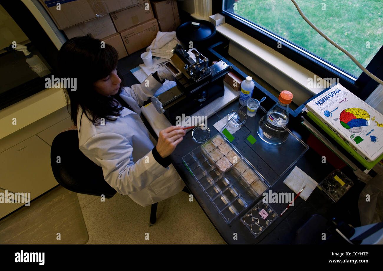 Pathology Assistant Stock Photos & Pathology Assistant Stock