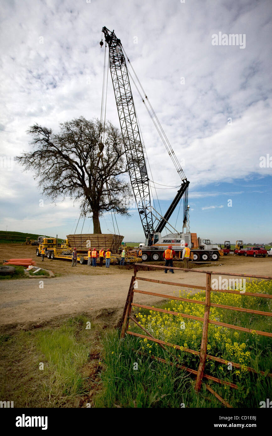 A 185,000-pound live oak tree, estimated to be more than 100 years old was hoisted up from the ground and moved - Stock Image