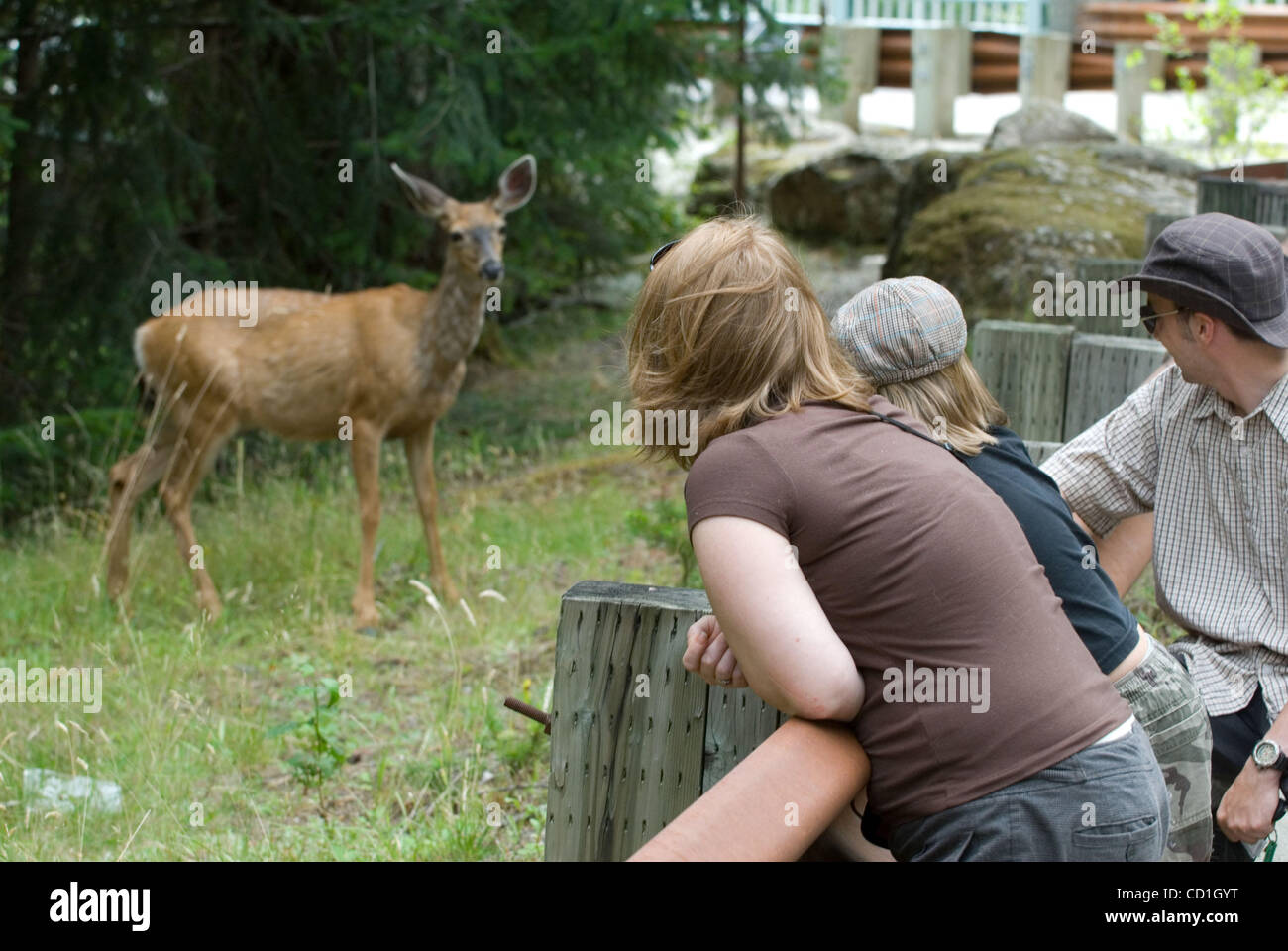 August 12, 2008, Newhalem, Washington - Visitors to the North Cascades National Park lean over a guard rail on the - Stock Image