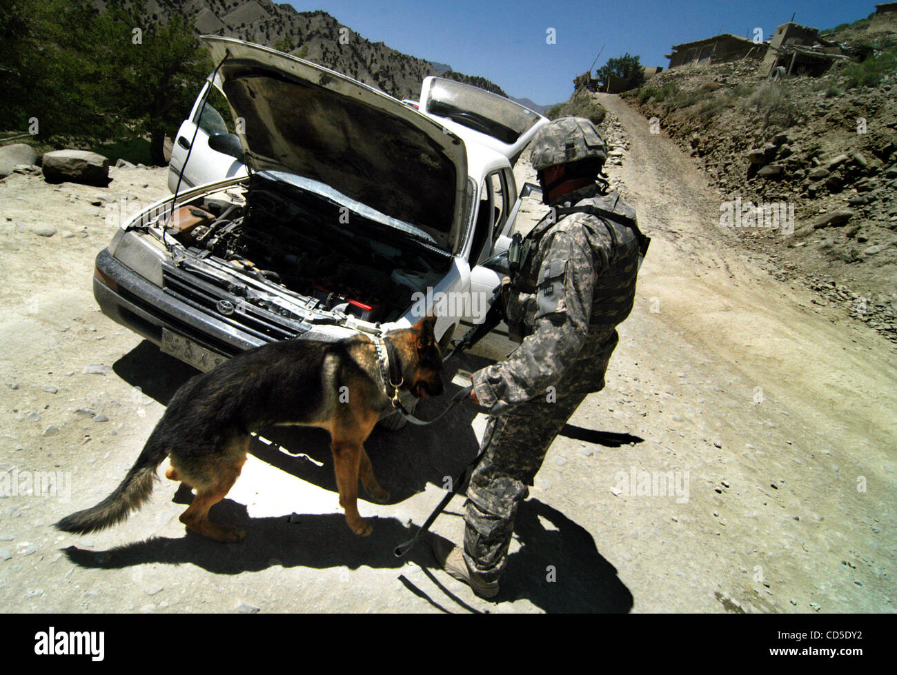 Download Afghanistan Army Adorable Dog - apr-26-2008-paktya-province-afghanistan-a-military-working-dog-is-CD5DY2  Pictures_386073  .jpg