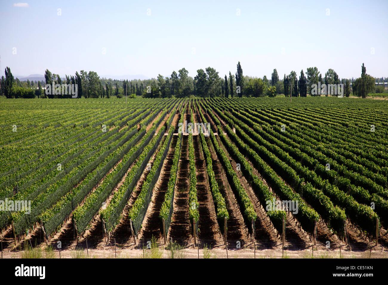 Mendoza - Stock Image