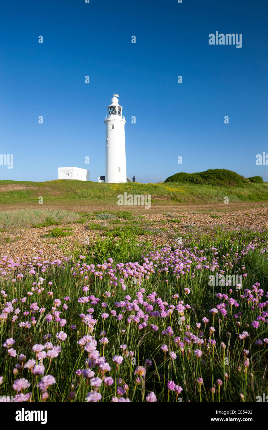 Wildflowers in front of Hurst Point Lighthouse, Hampshire, England. Spring (May) 2011. - Stock Image