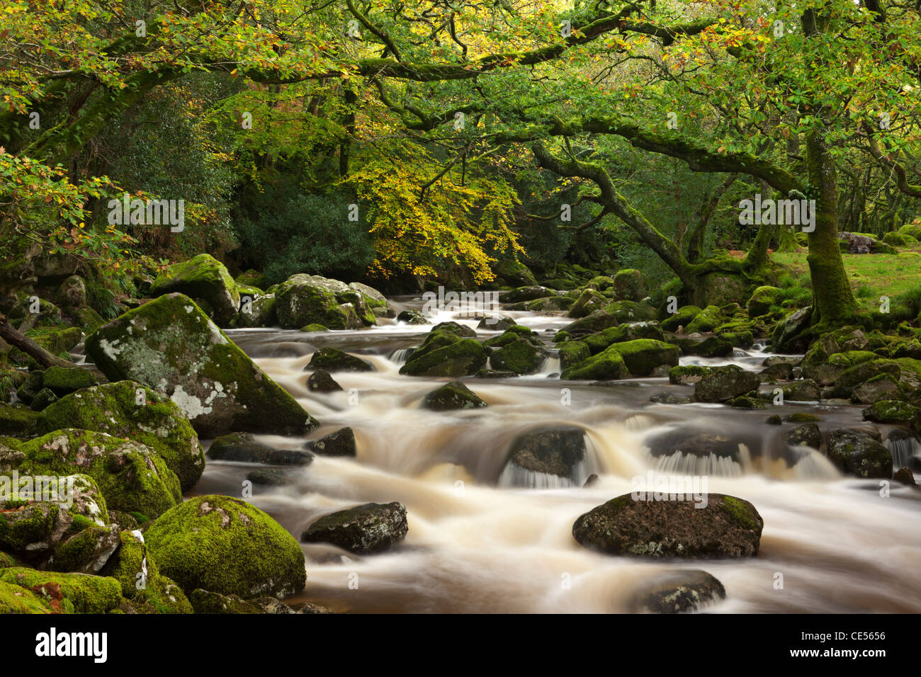 River Plym plunges past moss covered boulders on its course through Dewerstone Wood, Dartmoor, Devon, England. - Stock Image